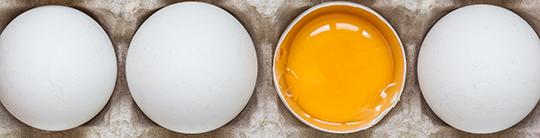 omega-3 eggs and yolk